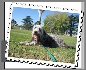pet-relocation-brazil
