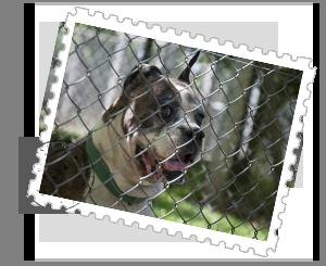 pet-relocation-ecuador