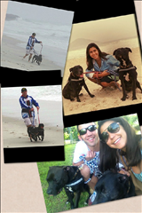 pet-shipping-services-rio